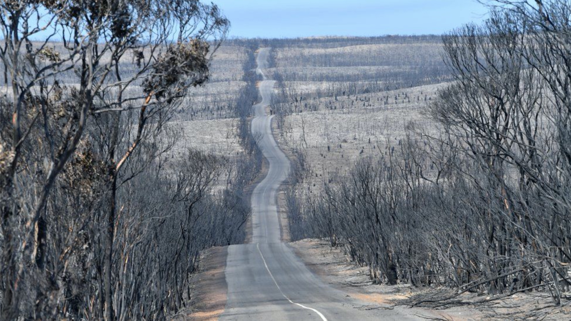 Image shows a desolate stretch of road surrounded by burned trees