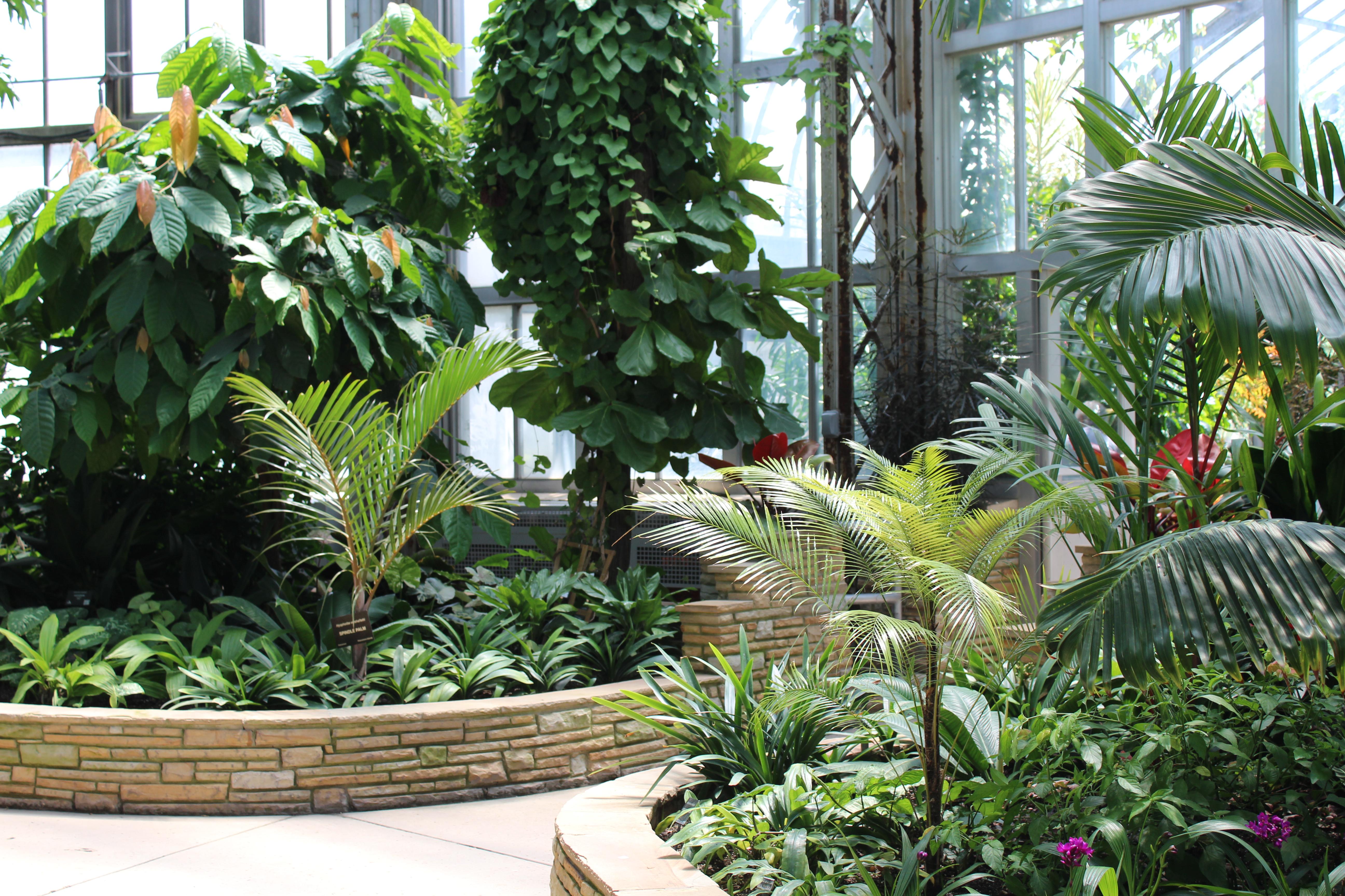Tropical garden inside Belle Isle Conservatory