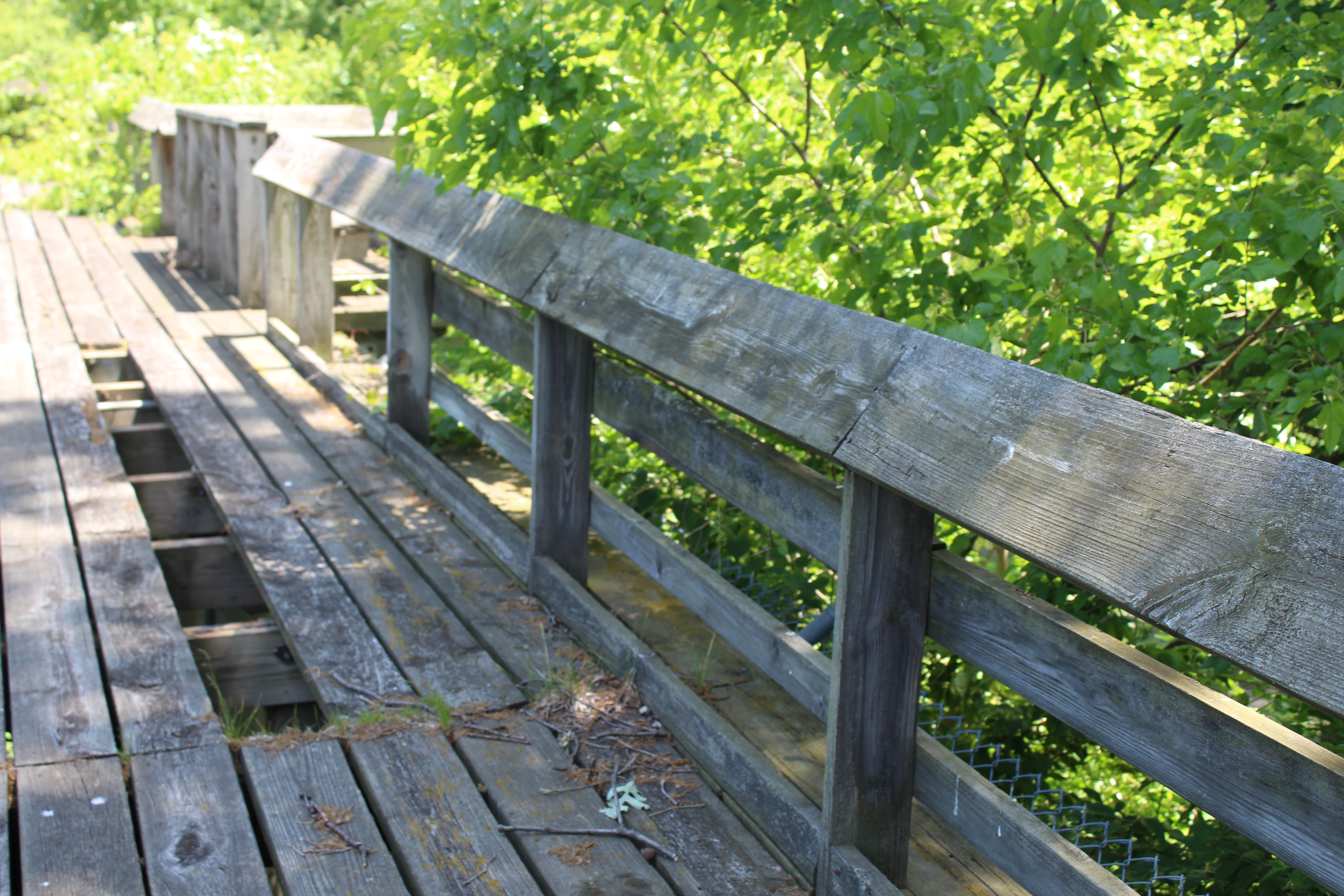 Wooden walkway with missing plank at Belle Isle Zoo