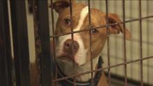 Photo courtesy Detroit Dog Rescue