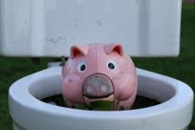 Close up of pink toy pig in a bowl